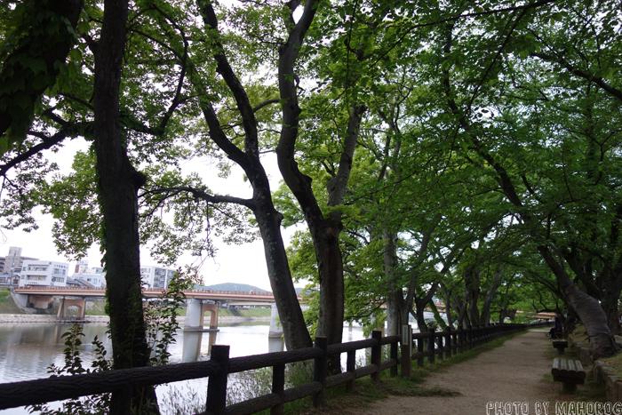 旭川沿いのベンチ
