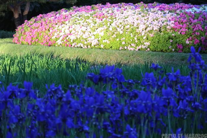 岡山後楽園の花壇