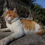 桜満開の尾道に花見に行ってみた 千光寺公園の桜と坂と猫の街