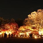 岡山後楽園の秋の幻想庭園